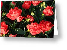 Ruffly Red Tulips Square Greeting Card