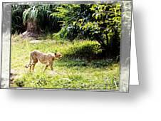 Run Cheetah Run 0 To 60 In 3 Seconds Greeting Card