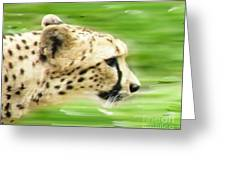 Run Cheetah Run Greeting Card