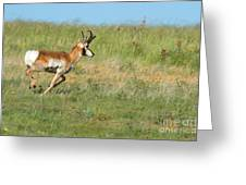 Run  Light Buck  Run Greeting Card