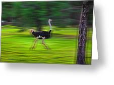Run Ostrich Greeting Card