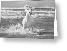 Run White Horses I Greeting Card by Tim Booth