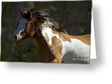 Runaway Horse   #4976 Greeting Card