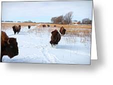 Running Buffalo Greeting Card