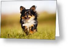 Running Chihuahua Greeting Card