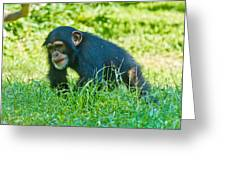 Running Chimp Greeting Card