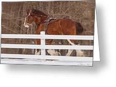 Running Clydesdale Greeting Card