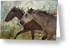 Running Free - Pryor Mustangs Greeting Card
