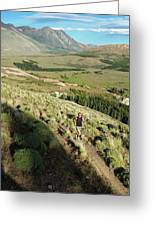 Running In Esquel, Chubut, Argentina Greeting Card
