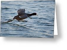 Running On Water Series 5 Greeting Card