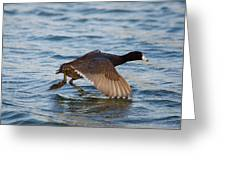 Running On Water Series 6 Greeting Card
