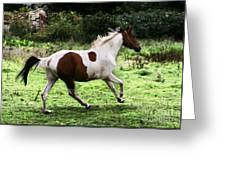 Running Pinto Horse Greeting Card