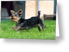 Running Puppy Greeting Card