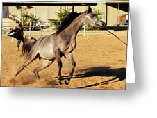 Running Roan Greeting Card