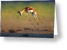 Running Springbok Jumping High Greeting Card