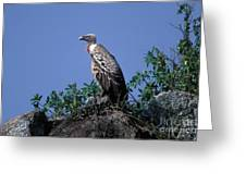 Ruppells Griffon Vulture Greeting Card