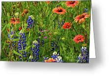 Rural Color Greeting Card