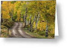 Rural Forest Service Road Greeting Card