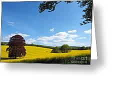 Rural Hampshire 1 Greeting Card