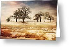 Rural Oaks Greeting Card