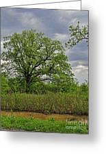 Rural Trees II Greeting Card