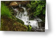 Rushing Mountain Stream And Moss Greeting Card