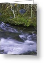 Rushing Stream And Creek Bank - Eastern Sierra Greeting Card