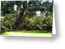 Ruskin Oak - Ocean Springs Greeting Card