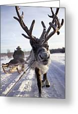 Russia, Siberia, Reindeer Sledding Trip Greeting Card