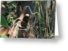 Rust In The Woods Greeting Card