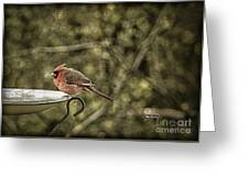 Rustic Cardinal Greeting Card