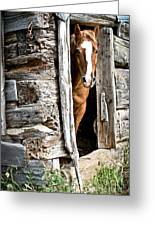 Rustic Horse Scene Greeting Card