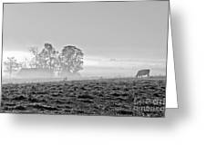 Rustic Morning In Black And White Greeting Card