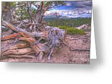 Rustic Roots Greeting Card