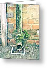 Rusty Drainpipe Greeting Card