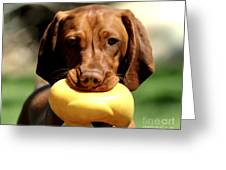 Rusty Has A Duck Greeting Card