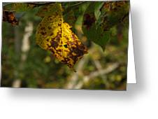 Rusty Leaf Greeting Card