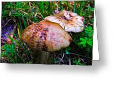 Rusty Mushroom Greeting Card