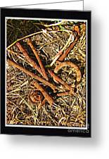 Rusty Nails Greeting Card