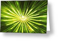 Rusty Reeds Greeting Card