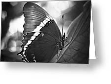 Rusty Tip Butterfly Black And White Greeting Card