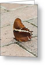 Rusty Tipped Page Butterfly Greeting Card