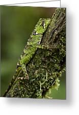 Sabah Eyebrow Lizard Mt Kinabalu Np Greeting Card by Ch'ien Lee