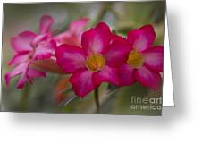 Sabi Star - Desert Rose Garden Of Dreams Hawaii Greeting Card