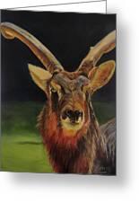 Sable Antelope Greeting Card