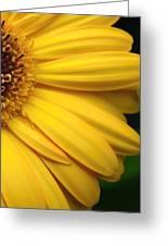 Sac331d-005 Greeting Card