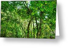Sacred African Rainforest Greeting Card