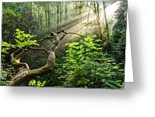 Sacred Grove Greeting Card
