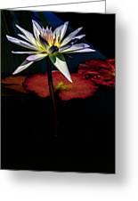 Sacred Water Lilies Greeting Card