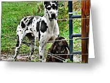 Sad Dogs Greeting Card